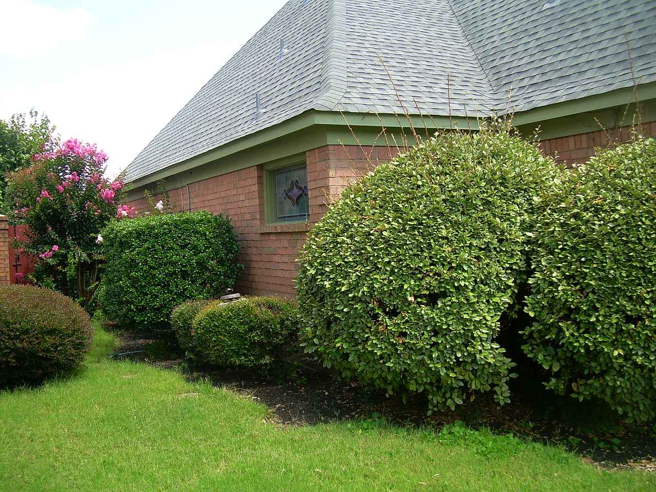 Overgrown Shrubs Hackley S General Services